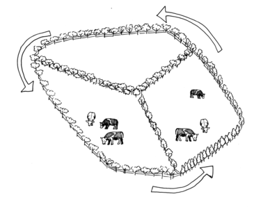 Illustration of the below: a pasture divided into thirds.
