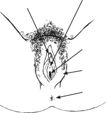 dibujo de los genitales exteriores femeninos con flechas que señalan diferentes parte